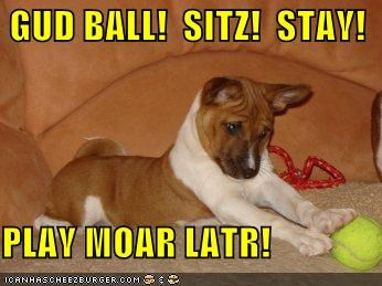 GUD BALL!  SITZ!  STAY!  PLAY MOAR LATR!