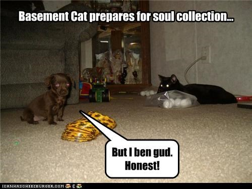 Basement Cat prepares for soul collection...