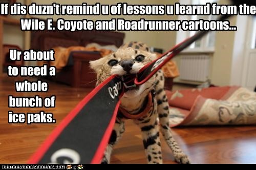 If dis duzn't remind u of lessons u learnd from the Wile E. Coyote and Roadrunner cartoons...