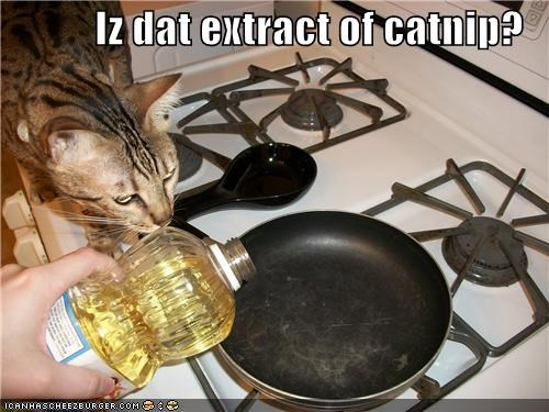 Iz dat extract of catnip?