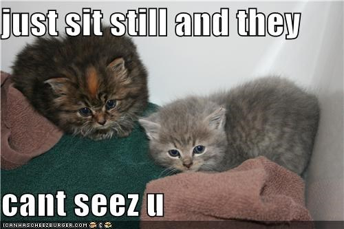 just sit still and they  cant seez u