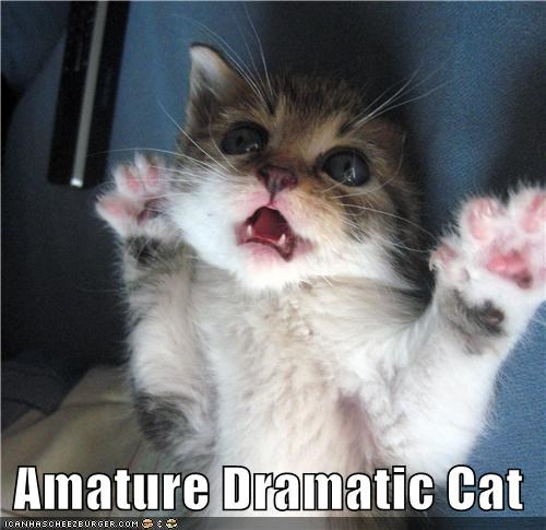 Amature Dramatic Cat
