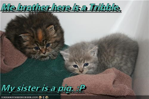 Me brother here is a Tribble.  My sister is a pig. :P