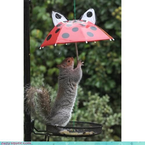 acting like animals,asking,go away,hiding,lyrics,rain,shelter,song,squirrel,umbrella
