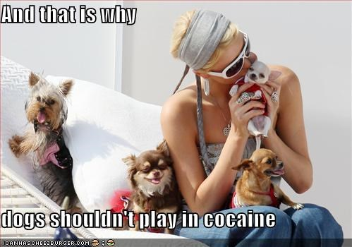 And that is why   dogs shouldn't play in cocaine