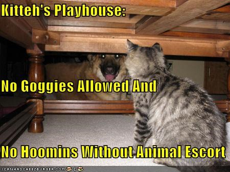 Kitteh's Playhouse: No Goggies Allowed And No Hoomins Without Animal Escort