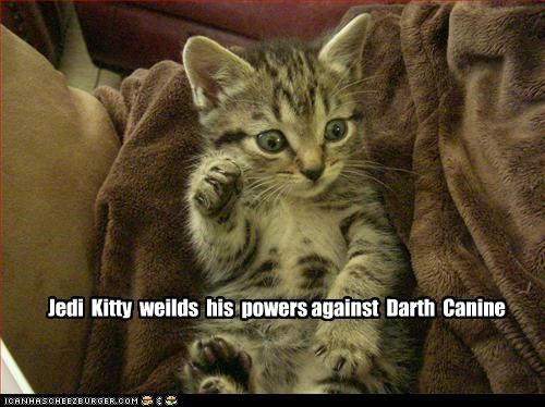 Jedi  Kitty  weilds  his  powers against  Darth  Canine