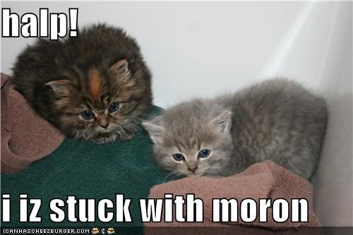 halp!  i iz stuck with moron