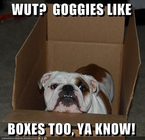 WUT?  GOGGIES LIKE     BOXES TOO, YA KNOW!
