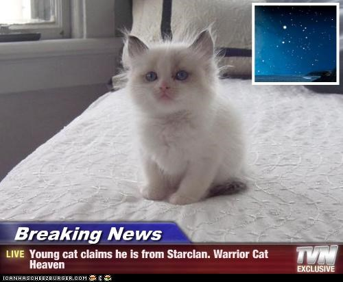 Breaking News - Young cat claims he is from Starclan. Warrior Cat Heaven