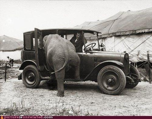 animals,cars,elephant,mom jokes,vintage,wtf