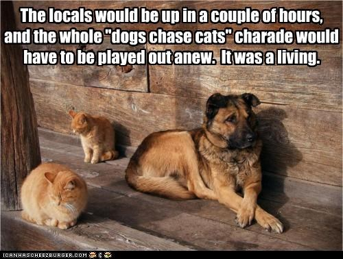 "The locals would be up in a couple of hours,  and the whole ""dogs chase cats"" charade would  have to be played out anew.  It was a living."