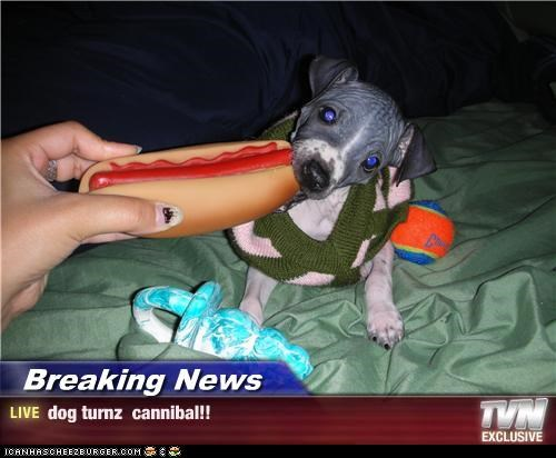 Breaking News - dog turnz  cannibal!!