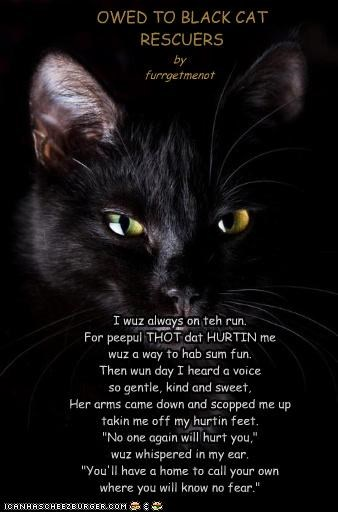 Poem *OWED TO BLACK CAT RESCUERS*