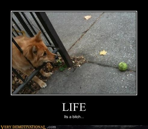 dogs,just out of your reach,life,sad but true,tennis ball