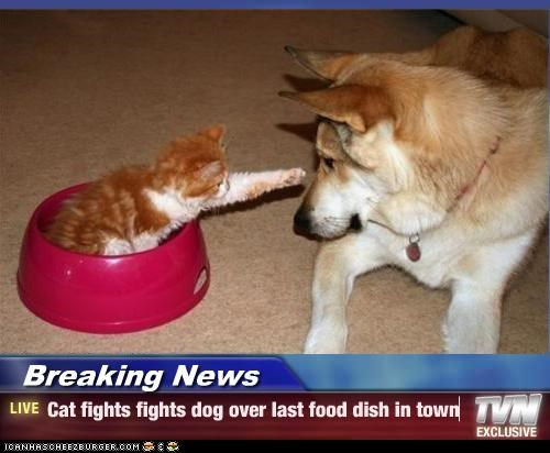 Breaking News - Cat fights fights dog over last food dish in town
