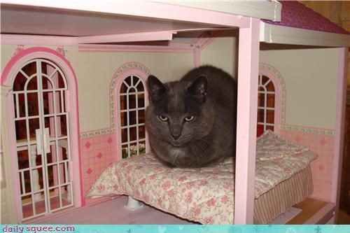 Kitteh in Barbie's House