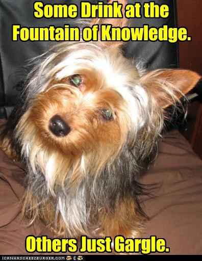 comparison,difference,drink,fountain of knowledge,gargle,mixed breed,some,terrier