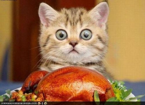 cyoot kitteh of teh day,food,hungry,nomz,Turkey,wide eyed