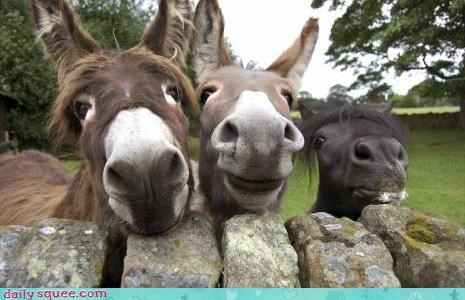 We Three Donkeys
