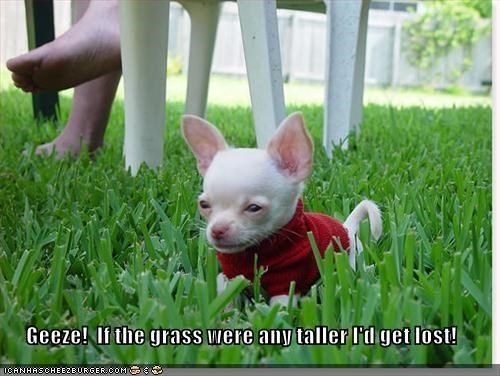 Geeze!  If the grass were any taller I'd get lost!