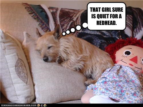 cuddling,doll,Hall of Fame,happy,quiet,raggedy ann,redhead,sleeping,stereotyping,surprised,terrier,whatbreed