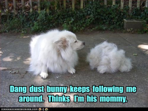 Dang  dust  bunny  keeps  following  me around.   Thinks   I'm  his  mommy.