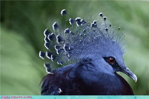 Birds Are Beautiful Too