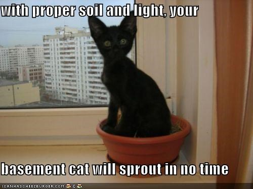 with proper soil and light, your  basement cat will sprout in no time