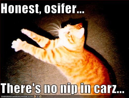 Honest, osifer...  There's no nip in carz...