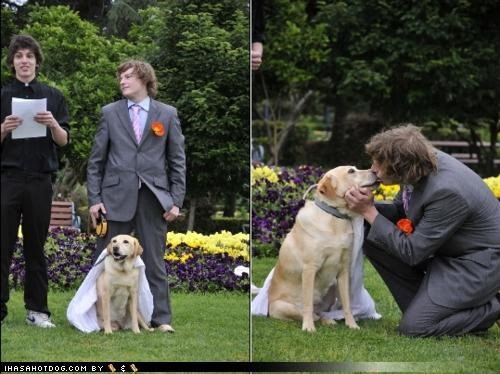australia,bizarre,ceremony,friendship,labrador,love,marriage,strange,vows,wedding