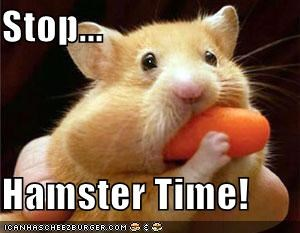 Stop...  Hamster Time!