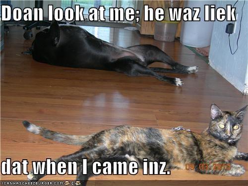 Doan look at me; he waz liek  dat when I came inz.