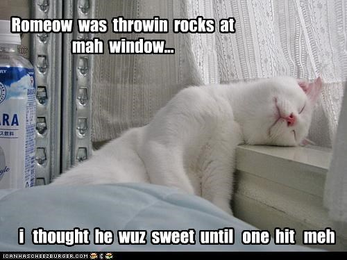 accident,beaned,caption,captioned,cat,hit,rocks,romantic,romeow,sleeping,throwing,window