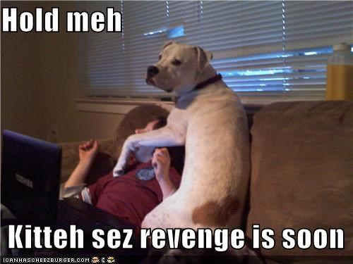 Hold meh    Kitteh sez revenge is soon