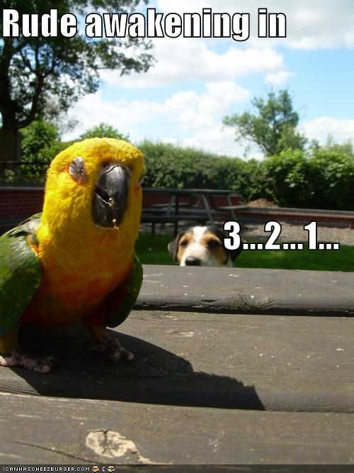 1,2,3,awakening,countdown,jack russell terrier,parrot,rude,sleeping
