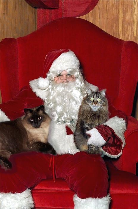 cat,creepy,fake beard,mall,throne