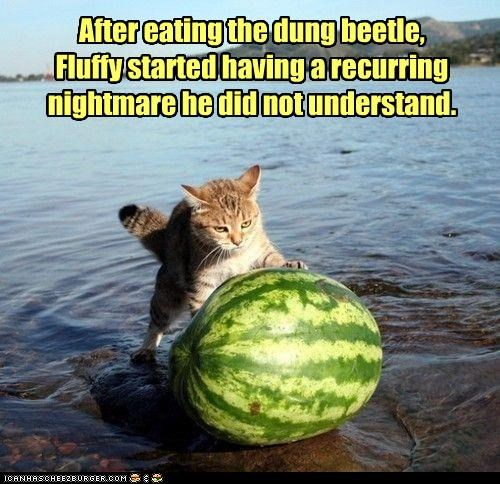After eating the dung beetle, Fluffy started having a recurring nightmare he did not understand.