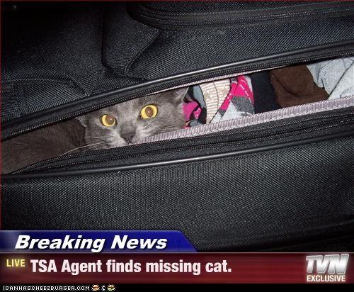 Breaking News - TSA Agent finds missing cat.