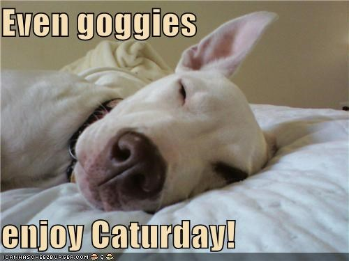 Even goggies  enjoy Caturday!