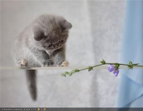 confused,cyoot kitteh of teh day,flowers,grey
