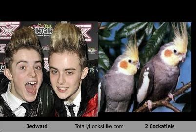 Jedward  Totally Looks Like 2 Cockatiels