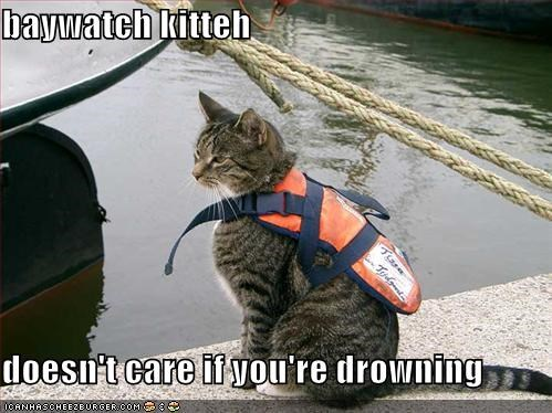baywatch kitteh  doesn't care if you're drowning
