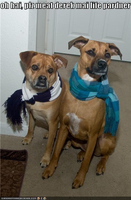 boyfriend,life partner,love,mixed breed,pit bull,pit bulls,scarf,scarves