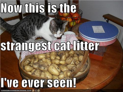 Now this is the strangest cat litter I've ever seen!
