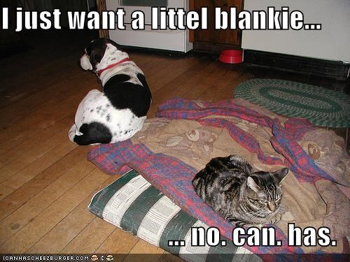 I just want a littel blankie...  ... no. can. has.