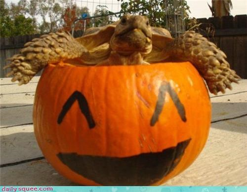 The pumpkin expresses what the turtle can't!