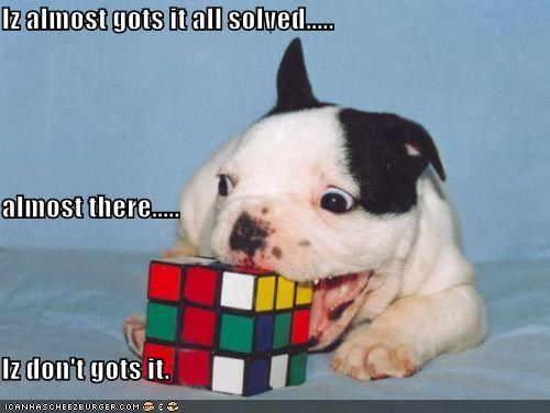 almost,confused,cube,determined,difficult,FAIL,got it,puppy,puzzle,rubiks cube,solved,trying,whatbreed
