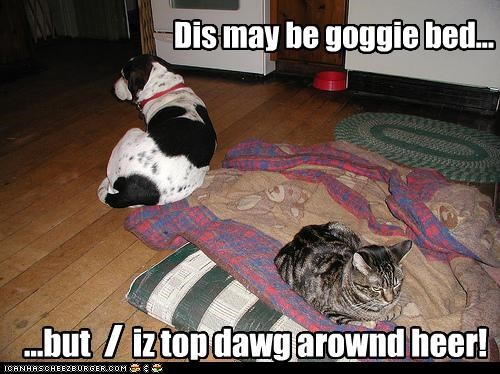Dis may be goggie bed...