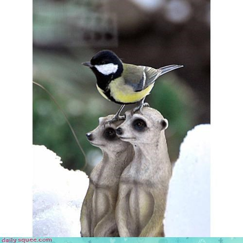 acting like animals,claws,commentary,confused,ignorance,meerkat,Meerkats,obviousness,perch,perching,pun,statue,statues,statuesque,talons